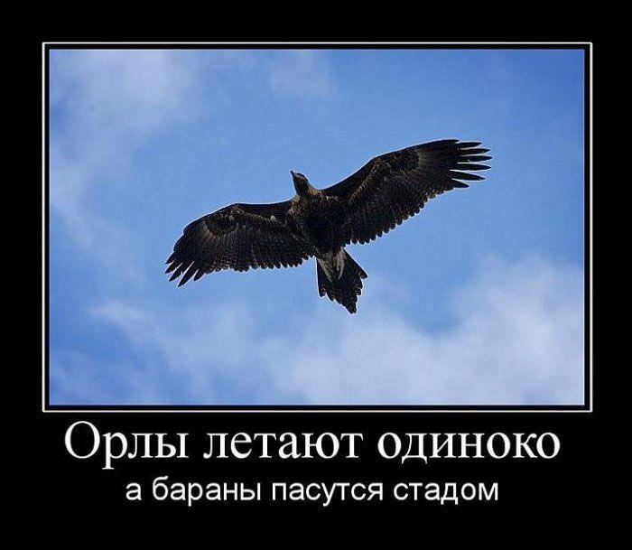 фото орла с демотиватор клиентам можем предложить