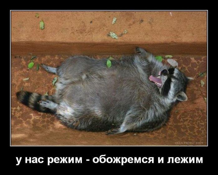 Смешные животные демотиваторы