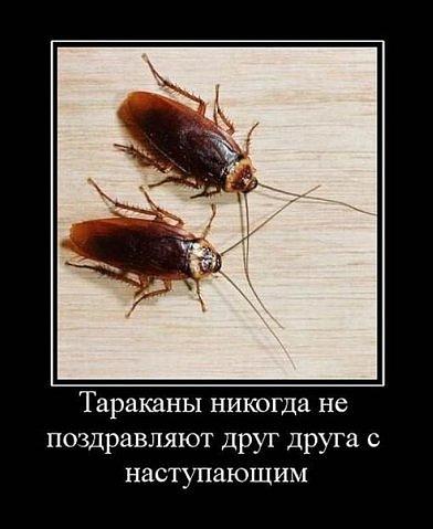 Стихи про тараканов смешные