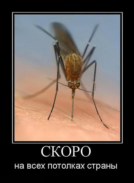 Смешные картинки про насекомых демотиваторы, выходных картинки