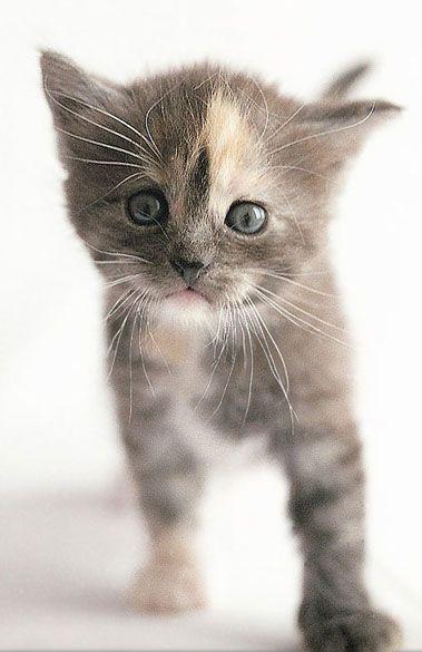движущиеся картинки про котиков судя