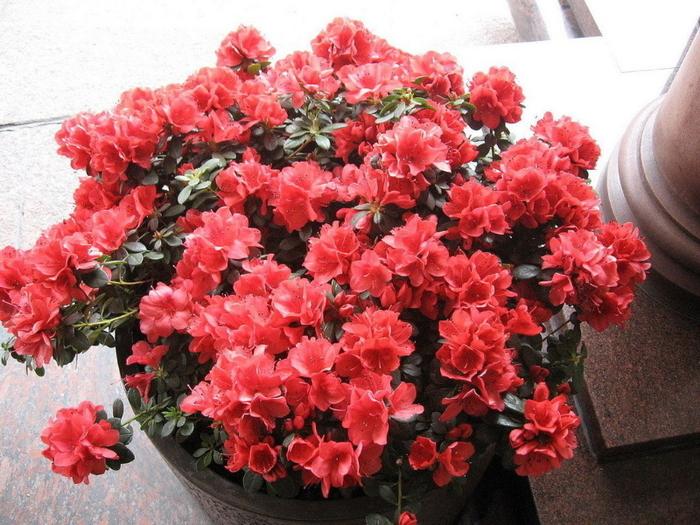 Самые красивые цветы домашние