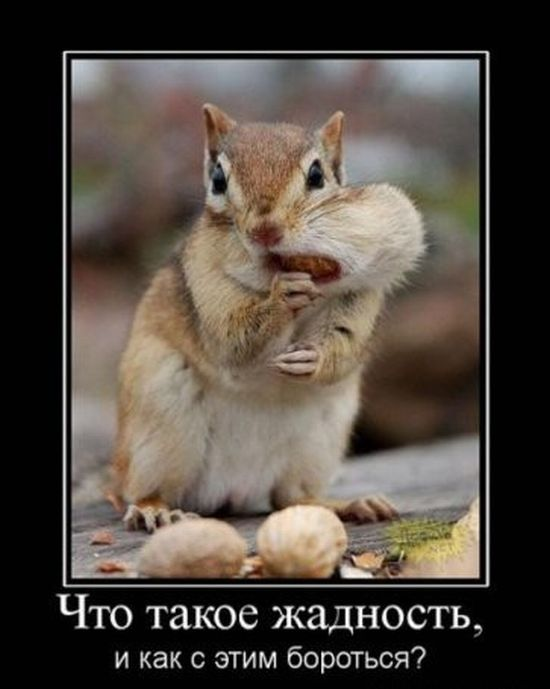 смешные фото про жадность сыр