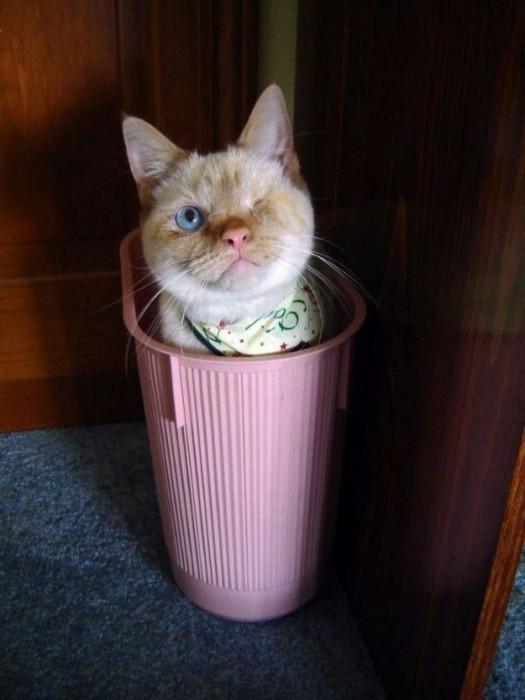 неожиданную мискм стоят рядом с мусорным ведром у кошки база