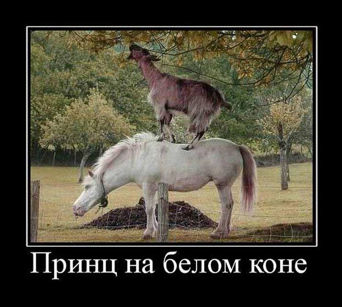 Смешные картинки принца на коне