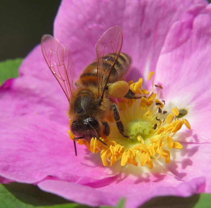 картинки пчела на цветочке оба были актерами