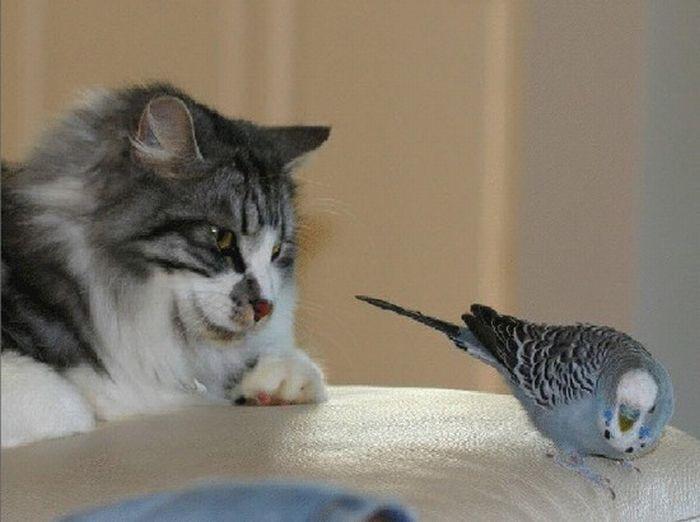Животные с прикольными надписями, днем медицинского сестры
