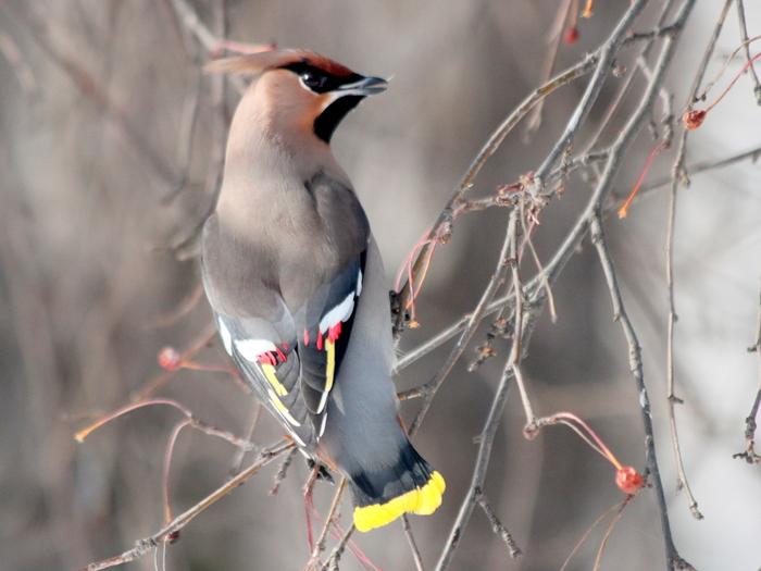 Птицы екатеринбурга фото и название