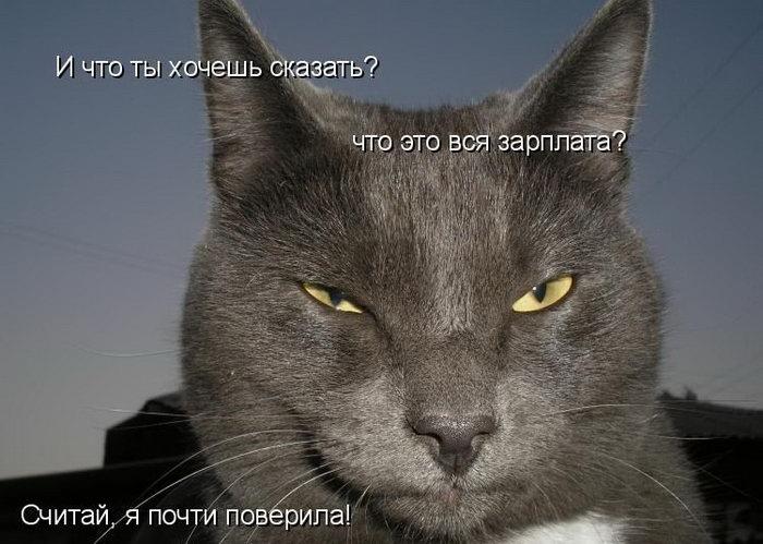Смешные картинки с подписями с животными