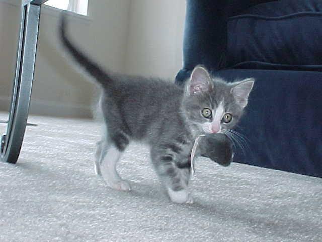 кошка домашняя с котятами фото