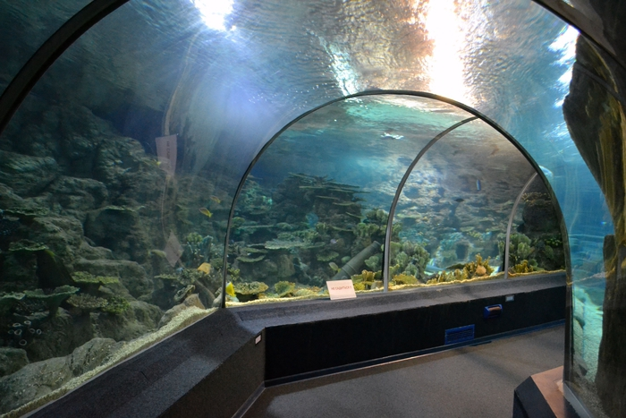 Адлер океанариум фото