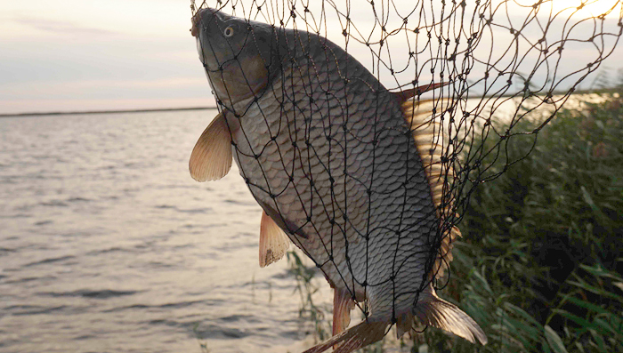 рыбалка, рыбалка на Урале, платные водоемы, Казахстан, Кустанай, озеро Чистое, карп, карась