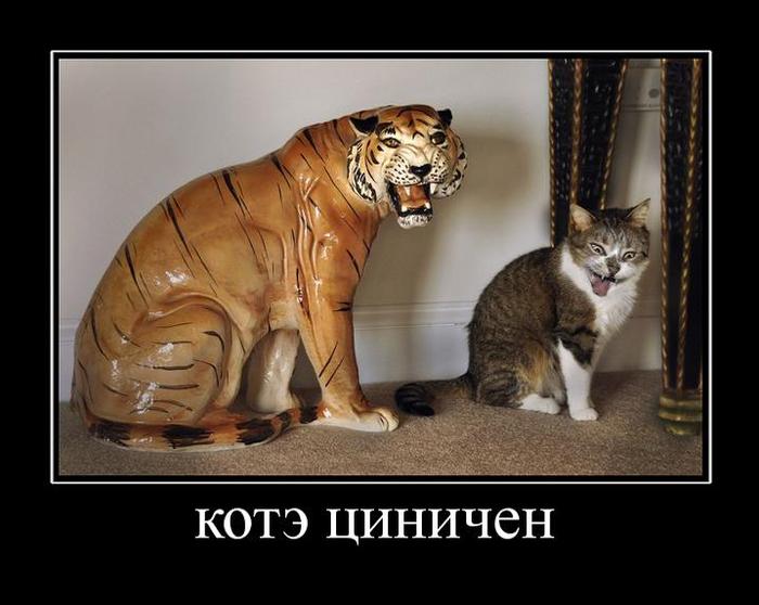 Демотиваторы ржачные про котенка