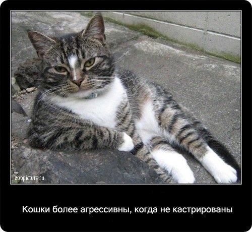 understanding cats behavior