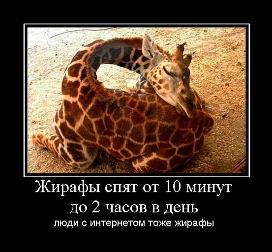Жирафа не может быть анекдот