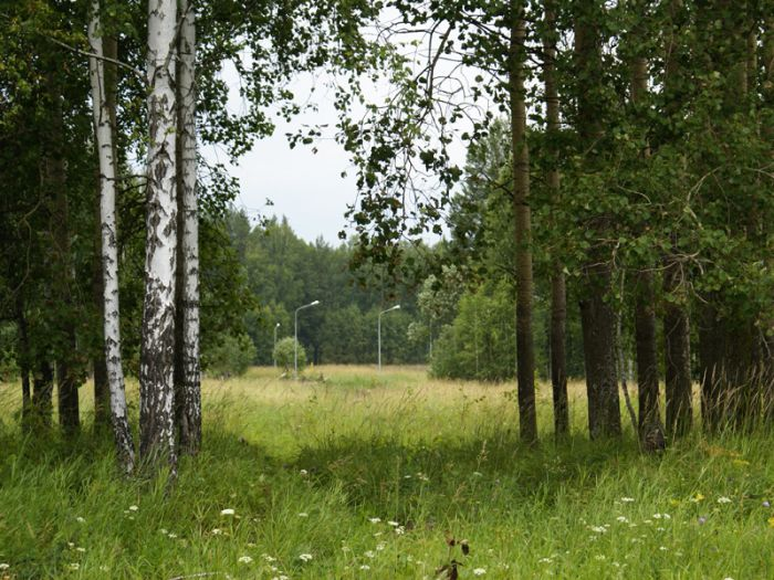 Территория парка-поселка «Заповедник»