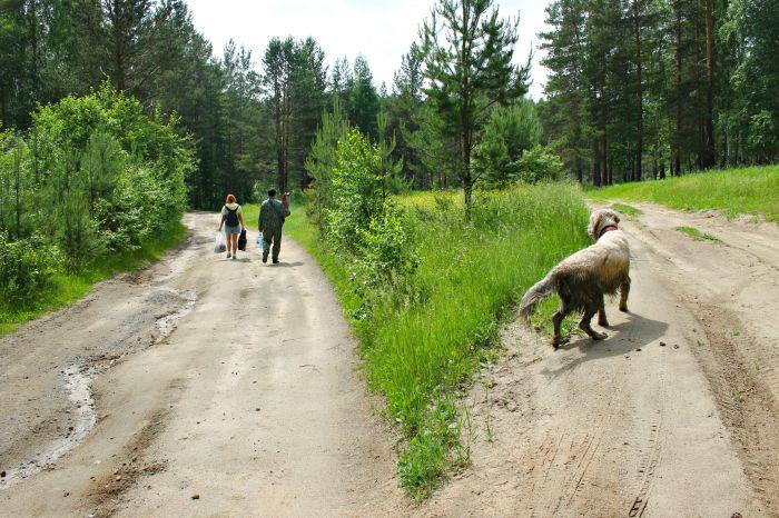 Дорога на Соколиный камень