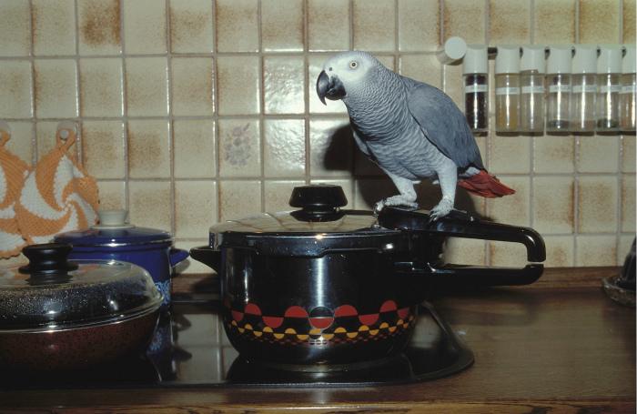У кого-то так жарко, что даже попугаи завелись